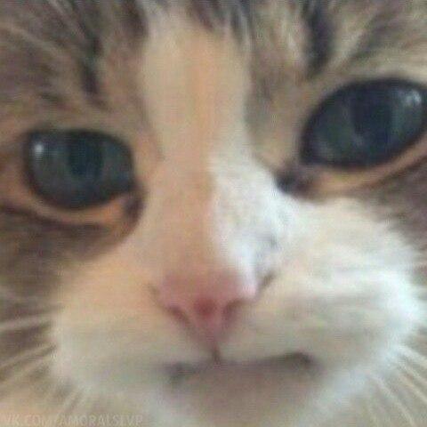 Мемы шаблоны котов