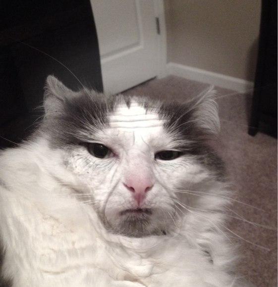Фото котов мем
