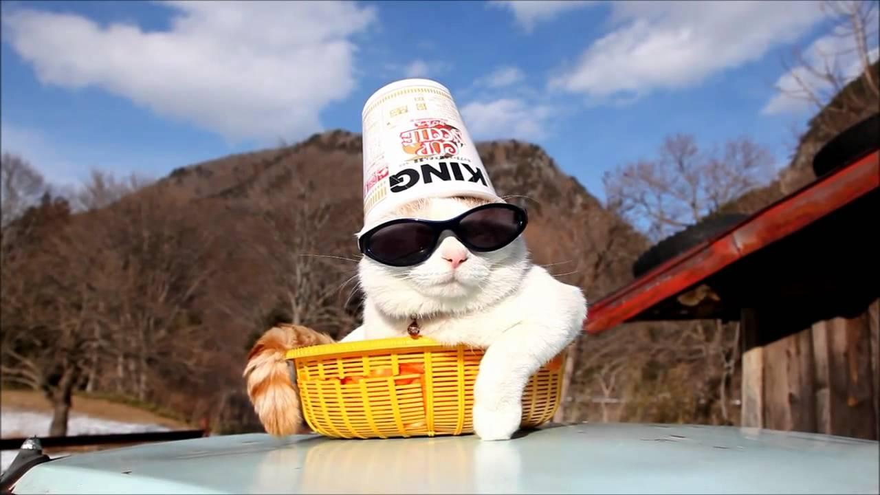 Скачать фото крутые коты в